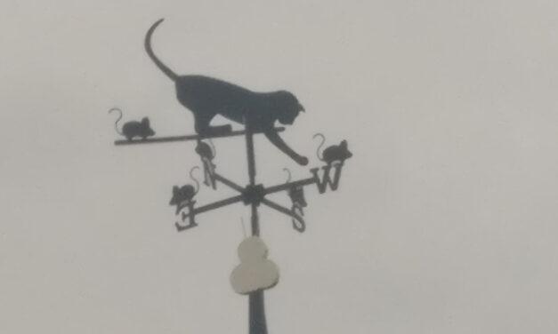 Windwijzer kat met muizen in Lies